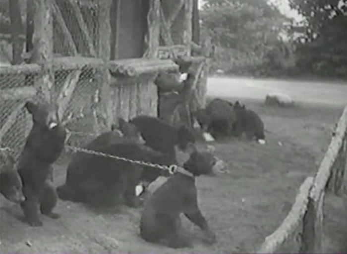 This movie is instructional in terms of zoos of the 1930s in that it was apparently a-okay to chain baby bears up and just throw bottles of milk at them.