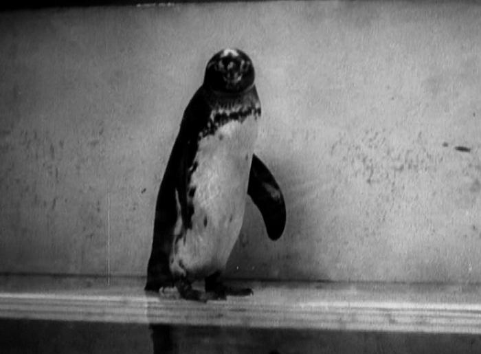 PenguinPoolMurder3
