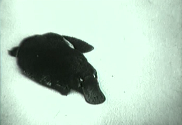 The most ominous platypus.