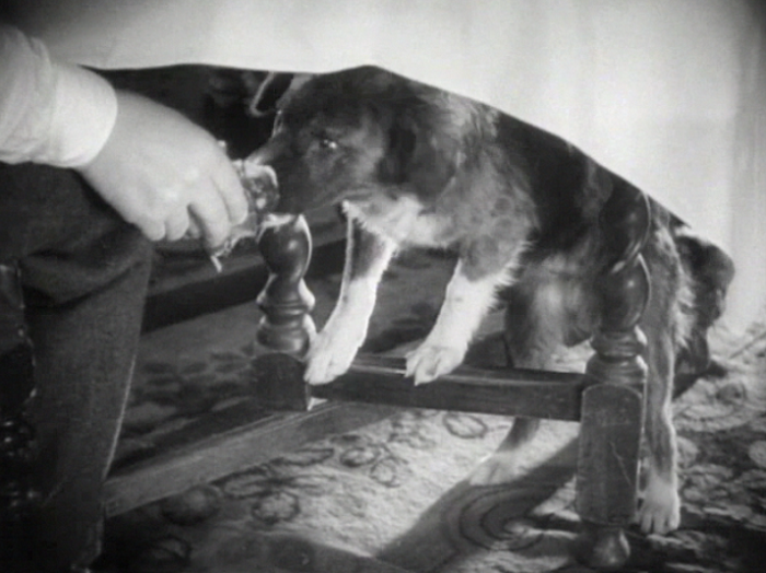 Pre-code dog watch: adorable dog sighted. It is willing to eat disgusting pancakes. Good boy!