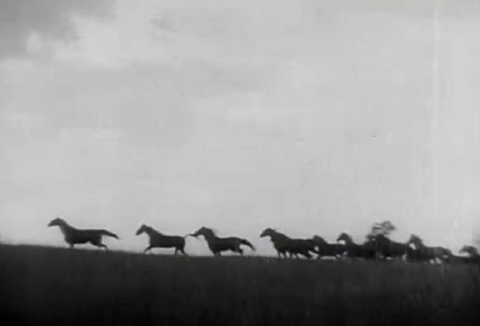 Sporting Blood (1931)