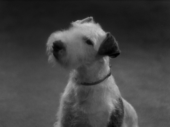 Pre-Code dog alert: Joan has this beautiful wire terrier for a scene.