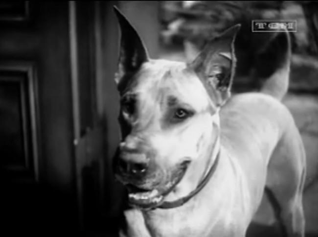 Pre-Code Dog Watch: Good boy!